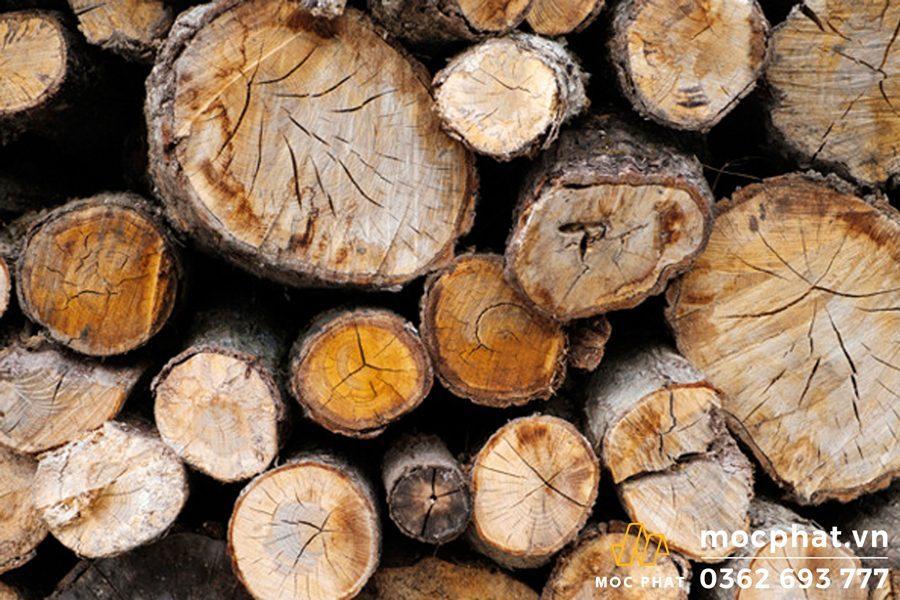 Các phương pháp xử lý gỗ tươi hiệu quả