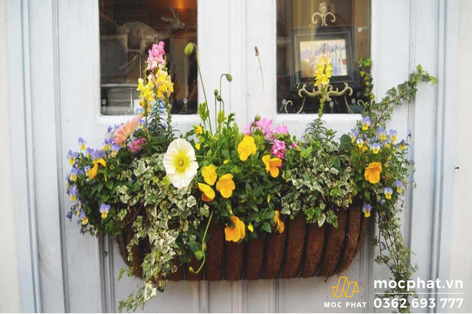 Lựa chọn những loại hoa phù hợp với ánh sáng mặt trời nơi bạn ở