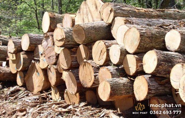 Cây gỗ thông