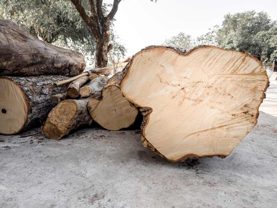 Chọn lọc gỗ thịt