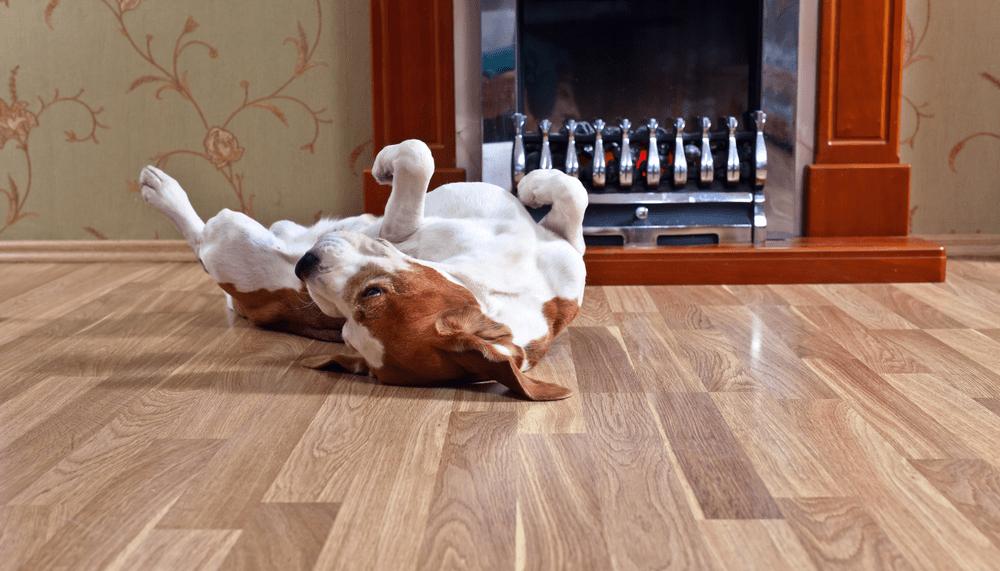 Chó mèo là vật nuôi có móng sắc nên việc lựa chọn sàn phù hợp là cần thiết
