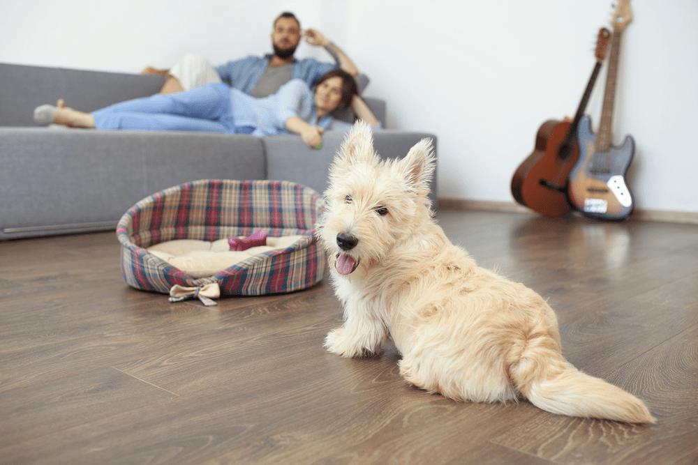 Sàn gỗ kỹ thuật dễ dàng chà nhám nếu thú cưng sử dụng móng cào